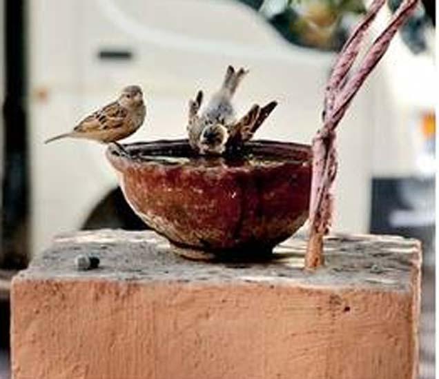 जलपात्रामुळे पक्ष्यांना पाणी मिळत आहे. - Divya Marathi