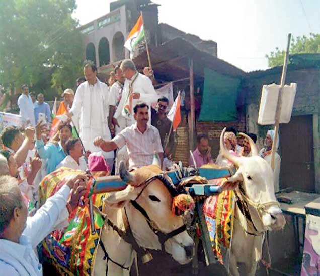 जळगाव जिल्ह्यातील पाळधी गावात रविवारी माजी उपमुख्यमंत्री अजित पवार व दाेन्ही काँग्रेसच्या प्रमुख नेत्यांनी बैलगाडीतून संघर्ष यात्रा काढली हाेती. - Divya Marathi