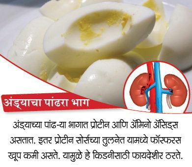 किडनीला हेल्दी ठेवतील हे 10 पदार्थ, निरोगी राहील शरीर वाढेल आयुष्य|जीवन मंत्र,Jeevan Mantra - Divya Marathi