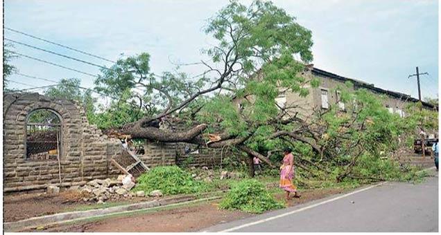 कडूनिंबाचे भलेमोठे झाड कोसळ्याने पालिकेची ब्रिटिशकालीन भिंत पडली, त्यामुळे नुकसान झाले. - Divya Marathi