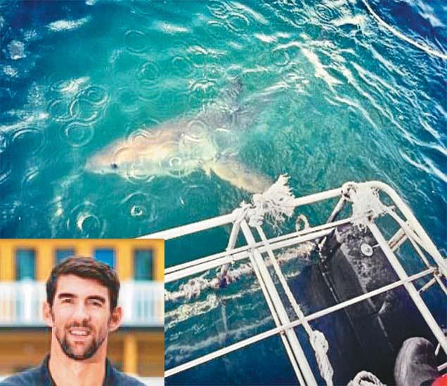फेल्प्सने व्हाइट शार्कसोबत सरावाची छायाचित्रे शेअर केली. - Divya Marathi