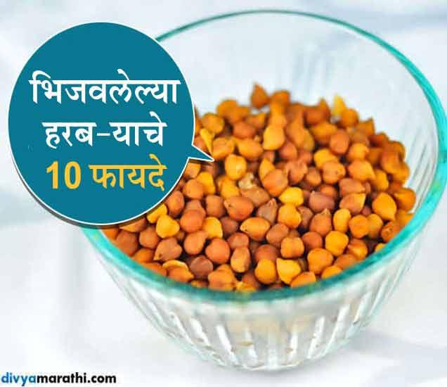 10 फायदे : अशा प्रकारे खावे हरबरे, होणार नाही बध्दकोष्ठता...|जीवन मंत्र,Jeevan Mantra - Divya Marathi