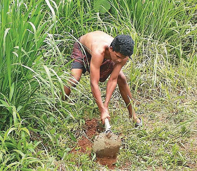 लिजो जॉयने फेसबुकवर शेअर केलेले हे छायाचित्र. यासोबत लिहिले की, मी याच ठिकाणी राहतो, याची साफसफाई करून शेती करेन. - Divya Marathi