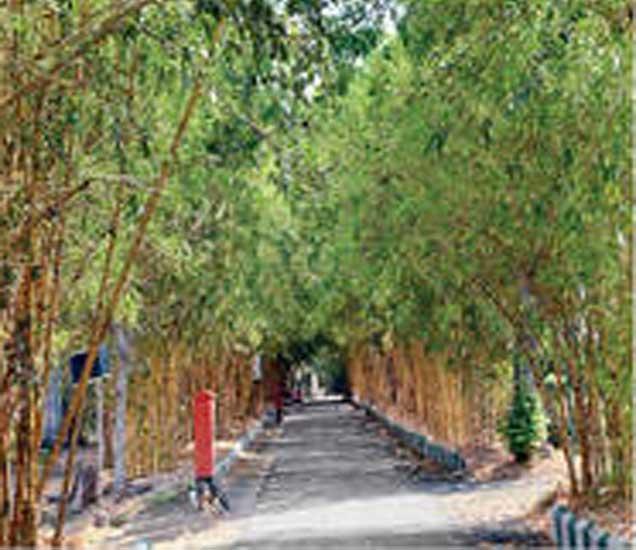 वडाळी येथील बांबू उद्यान. - Divya Marathi