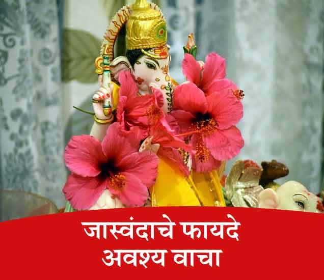 गणपती बाप्पांच्या आवडत्या फुलाचे आहेत 10 फायदे, अवश्य वाचा...|जीवन मंत्र,Jeevan Mantra - Divya Marathi