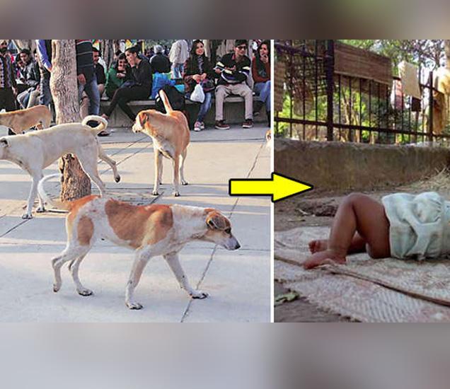 कुत्र्यांनी त्या मुलीचे संरक्षण केले. - Divya Marathi