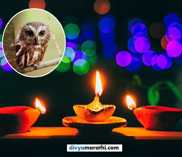 हे 4 प्राणी लक्ष्मीपूजनाच्या दिवशी दिसणे शुभसंकेत मानले जाते. - Divya Marathi