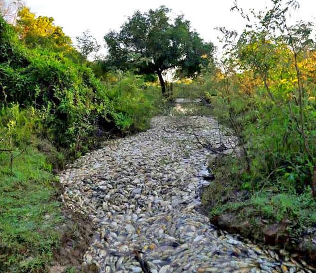 पराग्वेमध्ये नदीतील हजारोच्या संख्येने पडलेले मृत मासे. - Divya Marathi