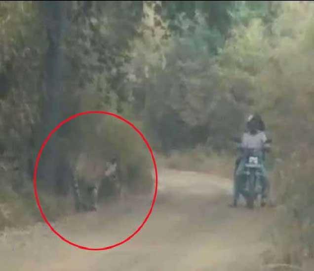वाघ या दुचाकीस्वारापासून काही अंतरावर होता. - Divya Marathi