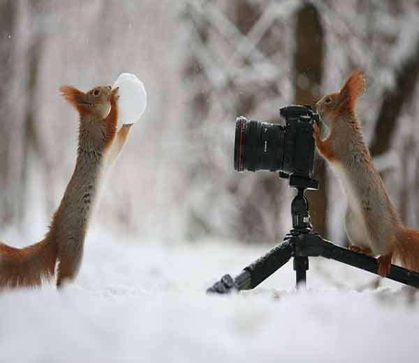 एक खारूताई बर्फाच्या गोळ्यासह पोज देताना दिसत आहे तर दुसरी खारूताई फोटो क्लिक करत आहे. - Divya Marathi
