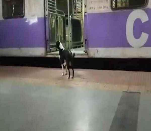 कांजूरमार्ग रेल्वे स्टेशनवर रोज रात्री ही डॉगी आपल्या मालकिणीच्या शोधासाठी येत असावी. - Divya Marathi