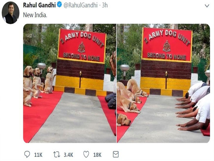 राहुल गांधी परत एकदा ट्रोलर्सच्या निशाण्यावर, श्वान पथक आणि जवानांच्या योगाची उडवली खिल्ली|देश,National - Divya Marathi