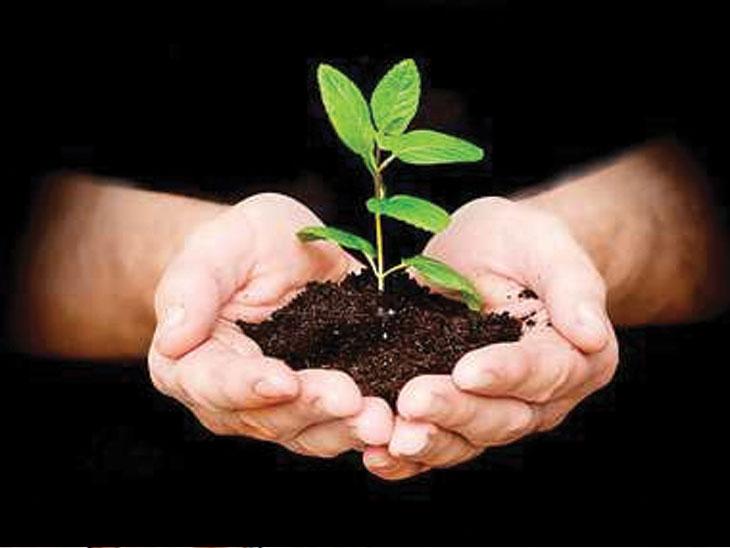 विरोधकांकडून 'झाडे'झडती : सरकारने ३३ कोटी झाडे चुकीच्या पद्धतीने लावली, त्यापैकी फक्त ५० टक्केच जगली मुंबई,Mumbai - Divya Marathi