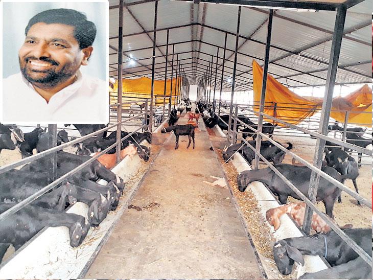 शेतीसाठी नोकरीवर सोडले पाणी,  शेतीपूरक व्यवसायातून प्रगती; शेतीपूरक अनेक नावीन्यपूर्ण उपक्रम अहमदनगर,Ahmednagar - Divya Marathi