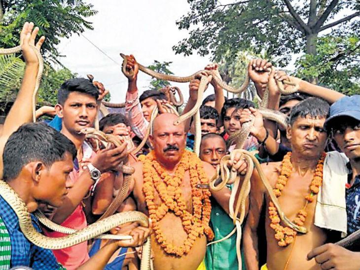 दरवर्षी नदीत उडी मारुन पकडले जातात शेकडो साप, अनेक वर्षांपासून सुरु आहे परंपरा देश,National - Divya Marathi