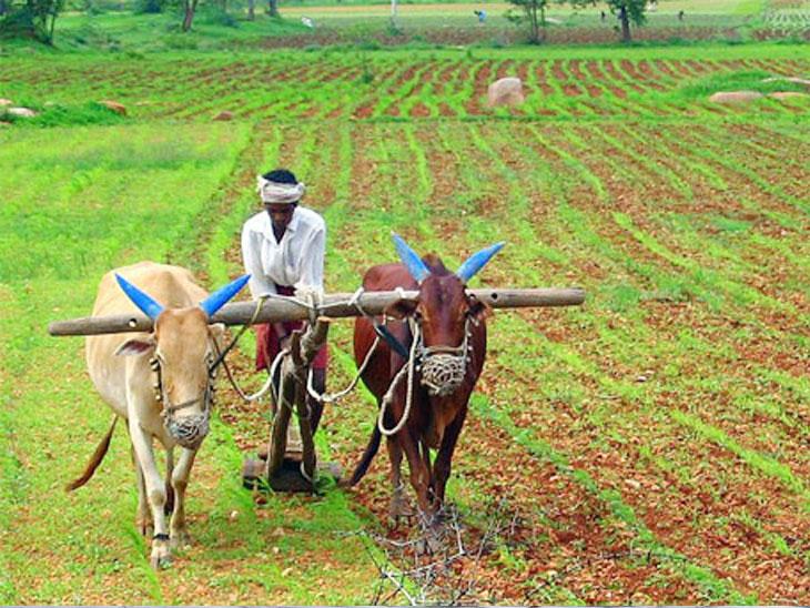 DvM Special : शेतकरी पेन्शन योजनेत ९४ लाख शेतकरी पात्र;  ३० लाख ९८७ खात्यांवर पहिला हप्ता|सोलापूर,Solapur - Divya Marathi