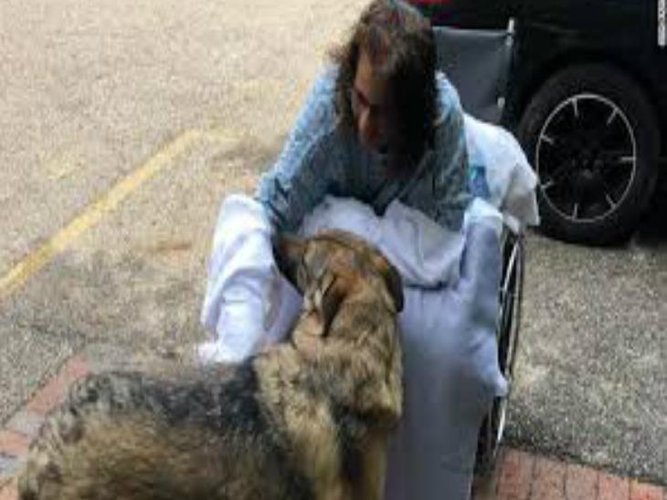 ट्रेनरने जर्मन शेफर्ड कुत्र्याची घेतली पप्पी, बॅक्टेरिअल इंफेक्शनमुळे गमवावे लागले हात-पाय| - Divya Marathi