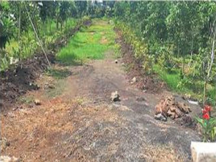 सहा वर्षांत १४ कोटी खर्ची, पण उद्यानांमध्ये दिसेना हिरवळ|सोलापूर,Solapur - Divya Marathi