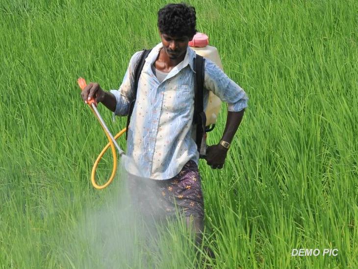 शेतात फवारणी करताना सात शेतकऱ्यांना विषबाधा, अकोल्यात उपचारादरम्यान एकाचा मृत्यू अकोला,Akola - Divya Marathi