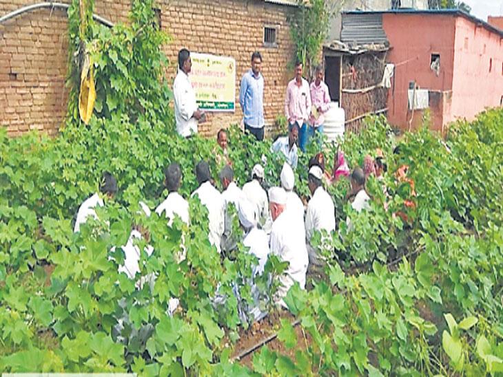 शेतीशाळांतून शेतकरी शिकताहेत सर्व प्रकारच्या अळ्यांचा नाश करण्याचा मंत्र  - Divya Marathi