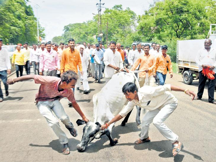 रस्त्यावरील मोकाट जनावरांना पकडून शेतकऱ्यांचे आंदोलन; भर उन्हात शेतकऱ्यांचा जिल्हाधिकारी कार्यालयासमोर साडेतीन तास ठिय्या  - Divya Marathi