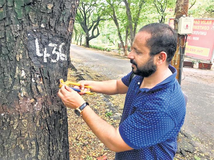 मुलगी म्हणाली-झाडांना मरण्यासाठी का सोडले? निरुत्तर पित्याने २ वर्षांत झाडांतील ८० हजार खिळे काढले; आता झाडांत खिळे ठोकणे झाला गुन्हा|पुणे,Pune - Divya Marathi