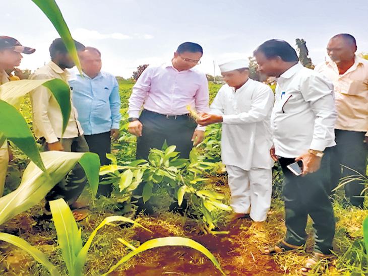 शेती गेली तळ्यात, पाण्याअभावी मोसंबीची पाचशे झाडेही तोडली; जोडव्यवसाय करत कुटुंब सावरणारा शेतकरी झाला कृषिभूषण औरंगाबाद,Aurangabad - Divya Marathi