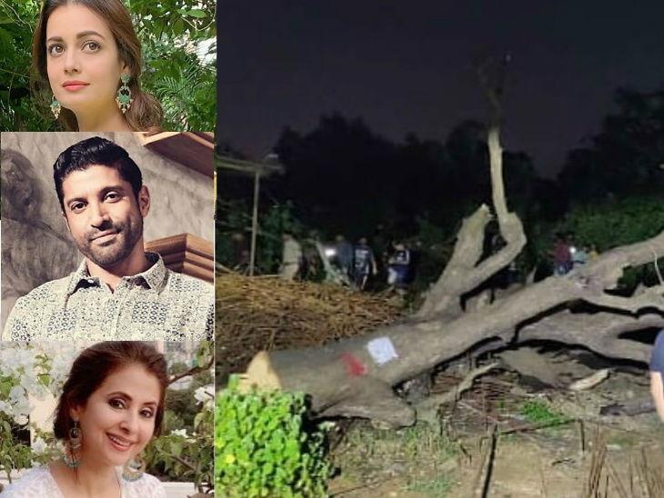 मध्यरात्री कापली गेली आरे फॉरेस्टमधील 400 वृक्ष, सेलिब्रिटींनी सोशल मीडियावर व्यक्त केला राग  - Divya Marathi