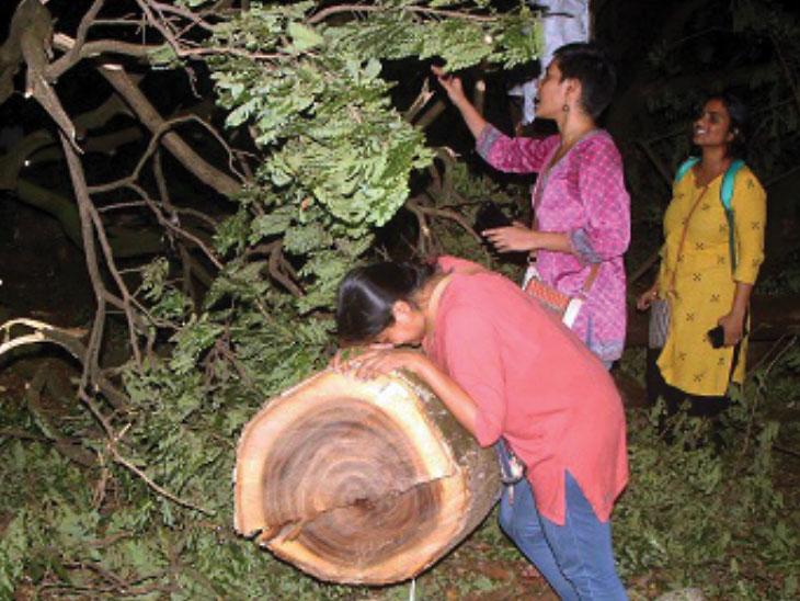 आरेतील वृक्षतोडीविरोधात उद्या सर्वोच्च न्यायालयात होणार सुनावणी; प्रकरणात दखल देण्याची विद्यार्थ्यांनी केली होती मागणी|मुंबई,Mumbai - Divya Marathi
