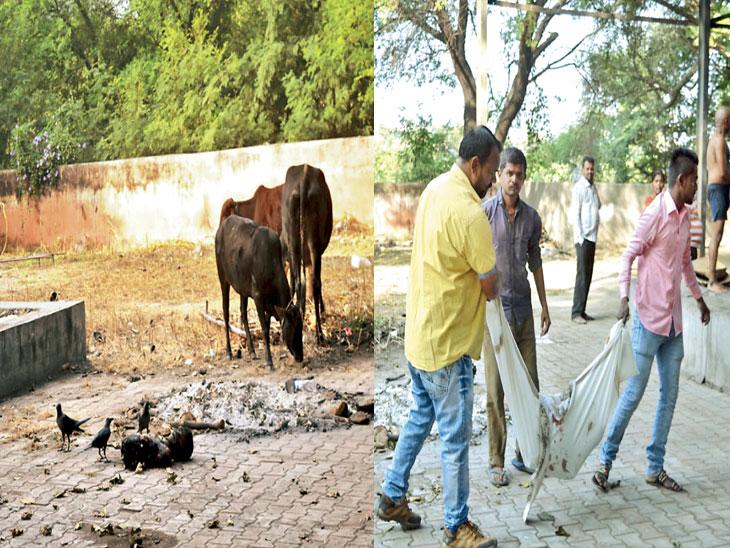 आधी मोकाट कुत्र्यांनी अर्धवट जळालेल्या मृतदेहाचे लचके तोडले, नंतर मृतदेहावर पुन्हा अंत्यसंस्कार करण्यात आले - Divya Marathi