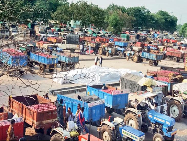 महाराष्ट्रातील नाशिकजवळील आशियातील सर्वात मोठी कांद्याची बाजारपेठ लासलगावमध्ये नवा कांदा येण्यास सुरुवात झाली आहे. - Divya Marathi