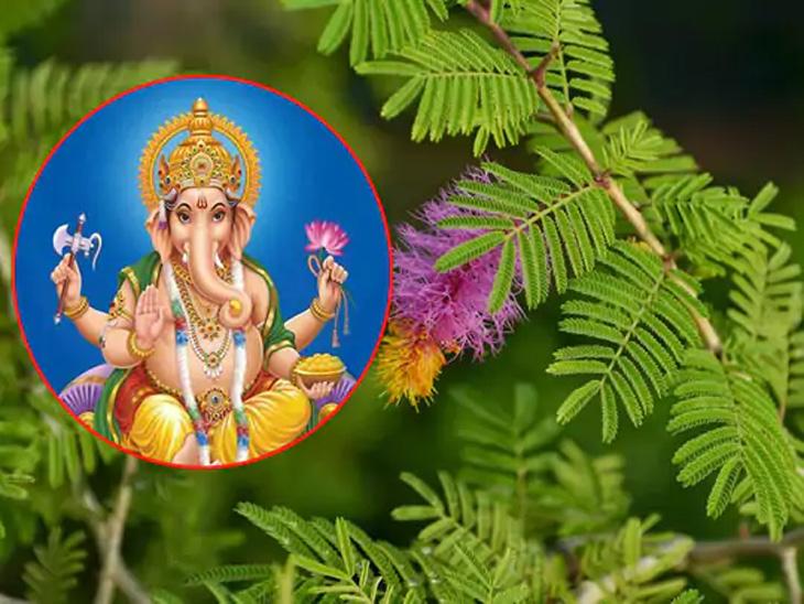 शनिदेव आणि महादेवासोबतच श्रीगणेशालाही अर्पण करावे शमीचे पान धर्म,Dharm - Divya Marathi