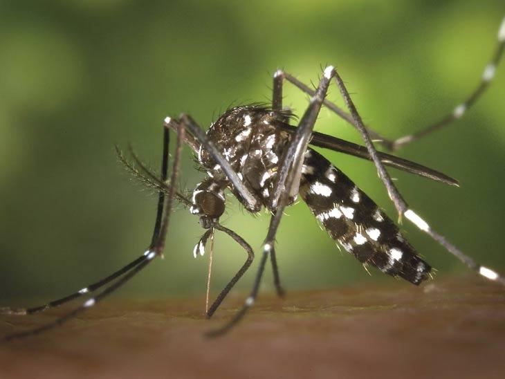 राज्यात डेंग्यूचे आतापर्यंत 6,374 रुग्ण आढळले, 11 मृत्यू; चिकुनगुन्याचीही रुग्णसंख्या पोहोचली 1,537 वर; लहान मुलांमध्येही साथरोगांचा मोठा संसर्ग|नाशिक,Nashik - Divya Marathi