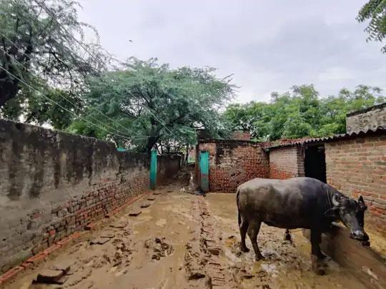 हे चित्र पीडितेच्या घराबाहेरचे आहे. पावसाच्या पाण्यामुळे येथे प्रचंड चिखल आणि घाण पसरली आहे. कुटुंबाला या घाणीतच राहावे लागत आहे.