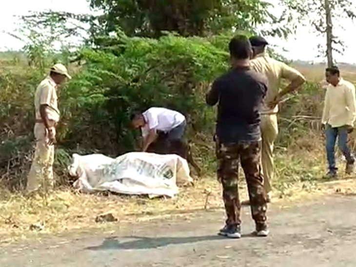 ગુજરાત હાઈકોર્ટનું અવલોકન મરઘીથી સિંહોમાં વાયરસની ફેલાયો, ગેરકાયદેસર લાયન શો અને પજવણીથી નારાજ|ઈન્ડિયા,National - Divya Bhaskar