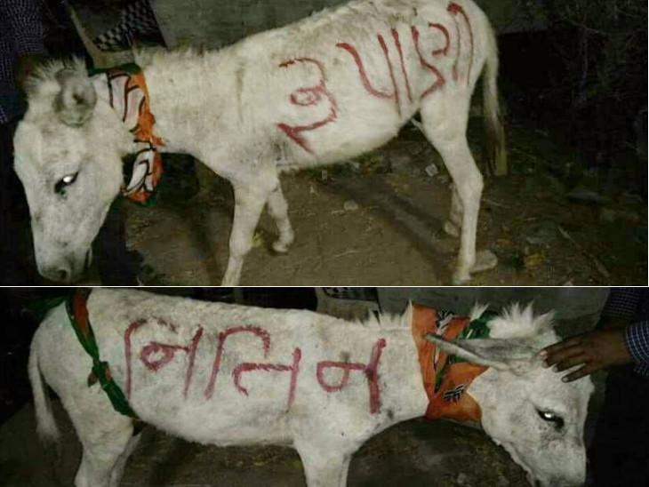 ગધેડા પર અમિત, મોદી, રૂપાણી, નીતિન નામ લખેલા ફોટો સોશિયલ મીડિયા પર ફરતા થયા| - Divya Bhaskar