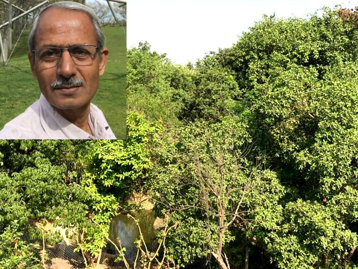 સ્નેહલ પટેલે સુરતમાં 16 હજાર ચોરસ મીટરમાં માનવ સર્જિત જંગલ બનાવ્યું|સુરત,Surat - Divya Bhaskar