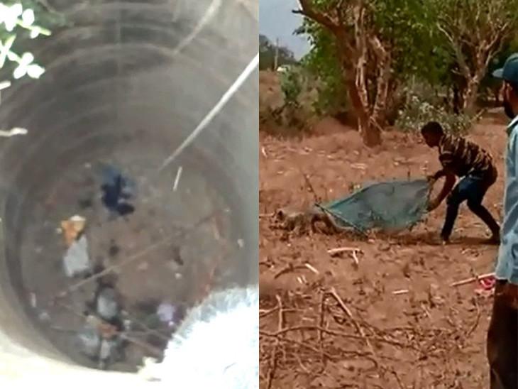 બે વાંદરા બાખડતા એક વાંદરો 120 ફૂટ ઊંડા કુવામાં પડ્યો, 4 દિવસ બાદ રેસ્ક્યૂ કરાયો| - Divya Bhaskar