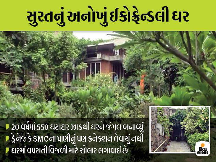 સુરતીએ ઘર ફરતે 16 હજાર ચોરસ મીટરમાં માનવ સર્જિત જંગલ બનાવ્યું|સુરત,Surat - Divya Bhaskar