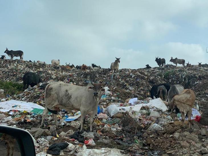 બોપલમાં કચરાના ઢગલાંથી હજારો પરિવાર પરેશાન, રોગચાળો ફેલાવાની શક્યતા|ઈન્ડિયા,National - Divya Bhaskar