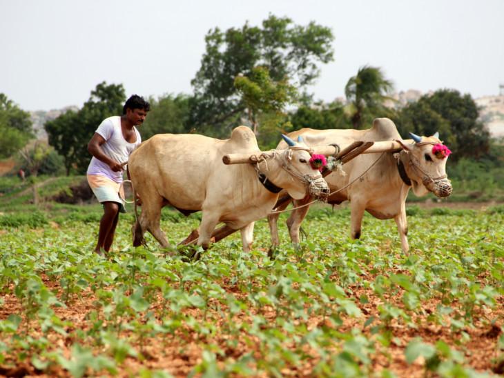 પેટાચૂંટણીની આચારસંહિતા પછી રાજ્ય સરકાર પ્રાકૃતિક કૃષિની યોજના લાવશે|ગાંધીનગર,Gandhinagar - Divya Bhaskar
