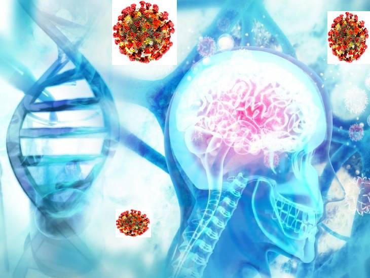 ડિમેન્શિયા સાથે સંકળાયેલા જનીનમાં ફેરફેર આવવાથી કોરોનાવાઈરસનું જોખમ વધી શકે છે|કોરોના - વેક્સિનેશન,Coronavirus - Divya Bhaskar