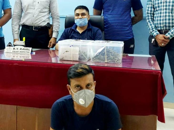 ચકરડીનો ધંધો બંધ થતા સુરતથી 57 કિલો ગાંજો લઇ આવતા પકડાયો|રાજકોટ,Rajkot - Divya Bhaskar