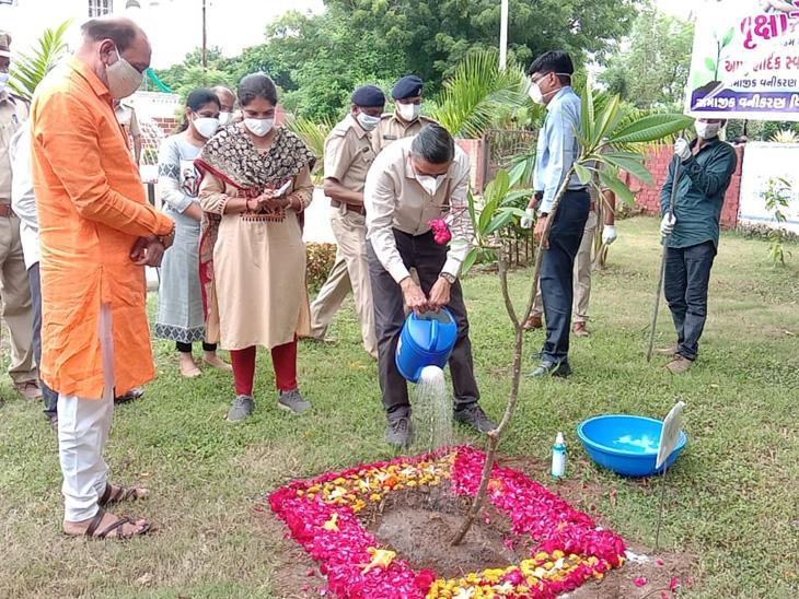 ભરૂચમાં વનમહોત્સવમાં આરોગ્ય મંત્રી  કિશોર કાનાણી અને જિલ્લા કલેક્ટર સહિતના મહાનુભાવોએ વૃક્ષારોપણ કર્યું હતું. - Divya Bhaskar