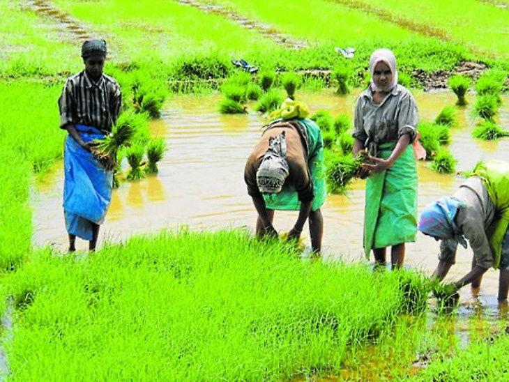 કોરોના સંકટમાં અર્થવ્યવસ્થાને ટેકો આપતી ગ્રામીણ માગ પ્રભાવિત થવાની શક્યતા, હવે વરસાદ પર મદાર|બિઝનેસ,Business - Divya Bhaskar