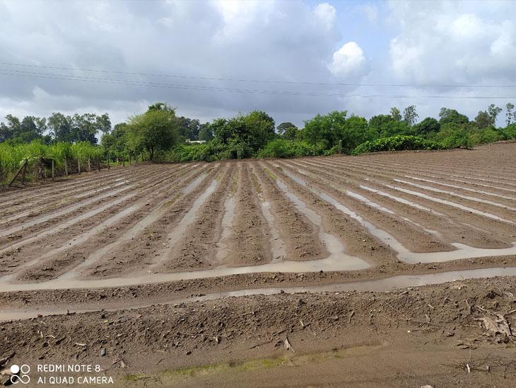 જિલ્લામાં ઓગસ્ટના અંત પહેલા જ 123% વરસાદ થઈ ગયો, બાકીના તમામ તાલુકામાં વરસાદ 100 %ને પાર|કડોદ,Kadod - Divya Bhaskar
