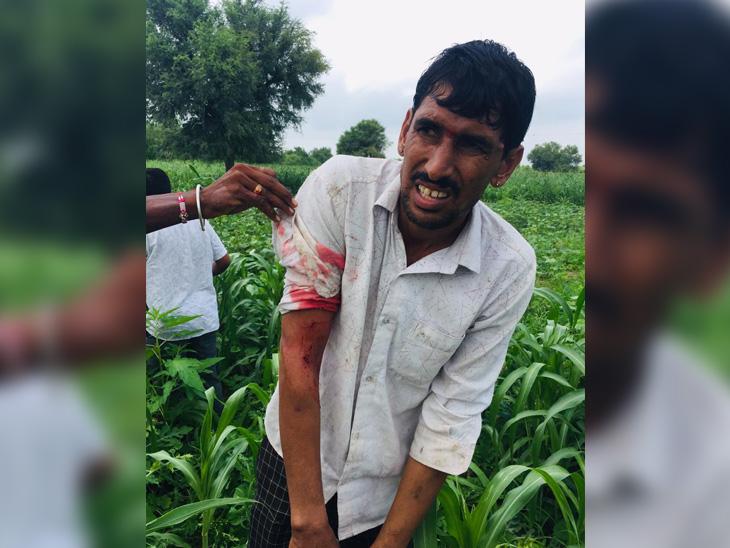 રાજસ્થાનમાં દીપડાએ બે ખેડૂતોને ઘાયલ કર્યા હતા. - Divya Bhaskar