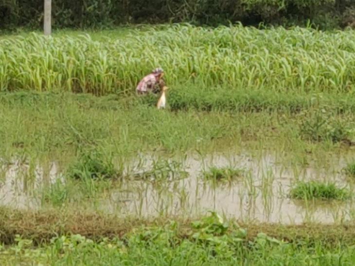 વઢિયાર પંથકમાં ખેતી પાકોને નુકસાન થતાં ખેડૂતોના જીવ અધ્ધરતાલ - Divya Bhaskar