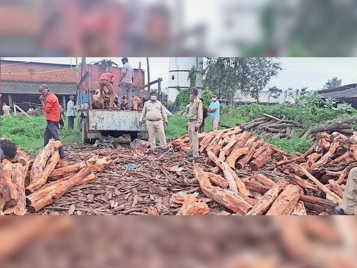 કાલોલ જીઆઇડીસીની બંધ કંપનીના ગોડાઉનમાંથી 140 ક્વિન્ટલ ખેરના લાકડાનો જથ્થો વેજલપુર વન વિભાગે જપ્ત કર્યો - Divya Bhaskar