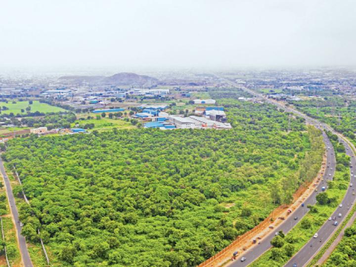 અમદાવાદમાં કુલ 26 લાખ વૃક્ષ, માત્ર ગ્યાસપુરમાં જ સૌથી વધુ 1 લાખ જેટલાં વૃક્ષનું ગ્રીન કવર અમદાવાદ,Ahmedabad - Divya Bhaskar